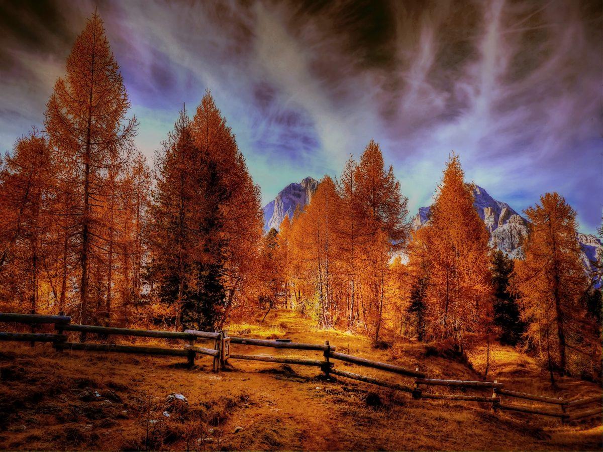 alpine-mountains-autumn-forest-trees-lu-1200x900.jpg