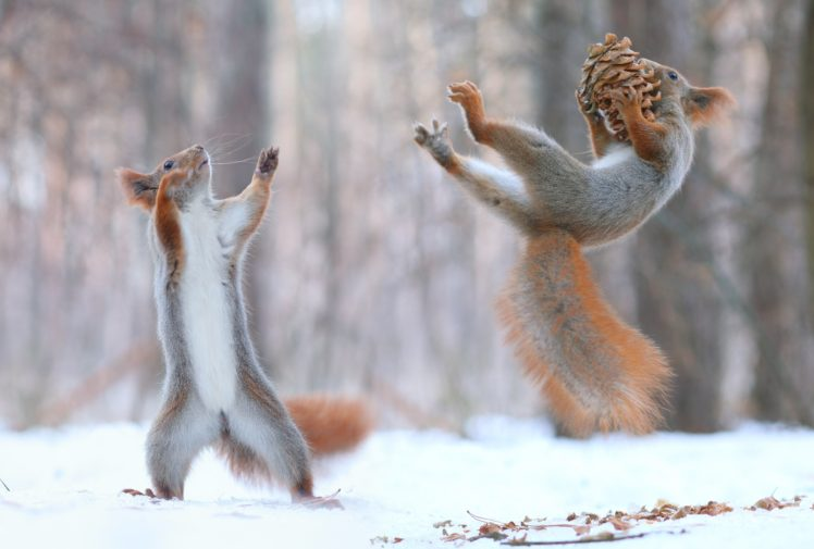 squirrel-pine_cones-snow-748x505.jpg