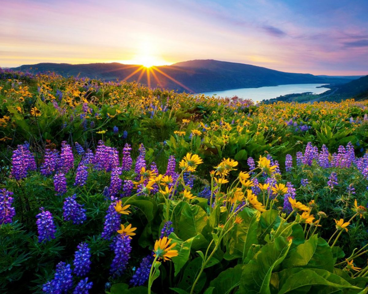 Sunrise-morning-first-sun-rays-flowers-meadow-with-mountain-lake-mountains-HD-Wallpaper-for-Desktop-1280x1024-1200x960.jpg