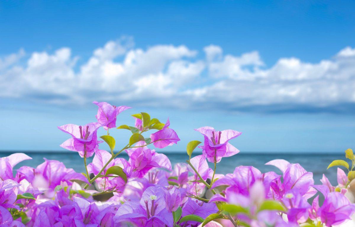 summer_flowers-1200x766.jpg