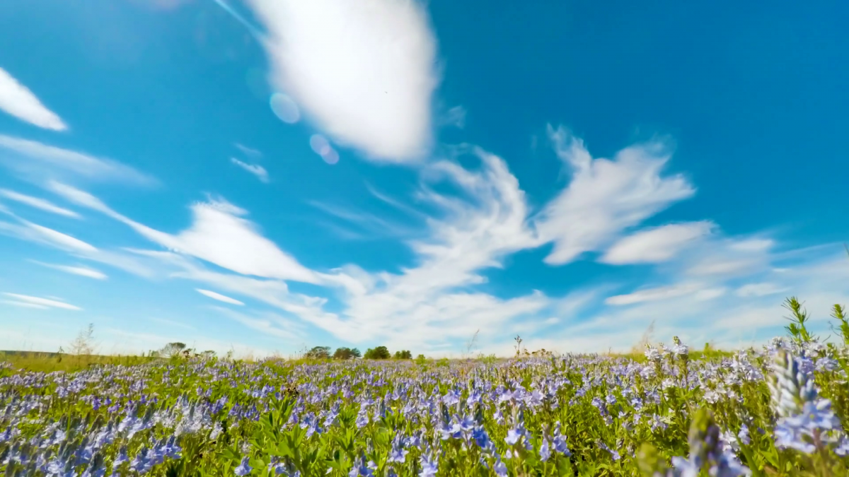 videoblocks-summer-clouds-roll-over-field-green-grass-blue-flowers-beneath-blue-sky-time-lapse-clouds_suye_wvzw_thumbnail-full01-1200x675.png