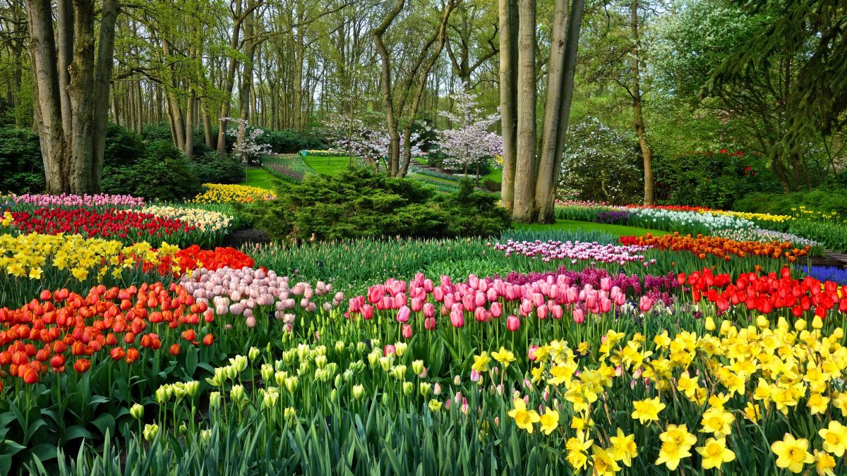 Garden-flowers-daffodils-and-tulips_3840x2160-1200x675.jpg