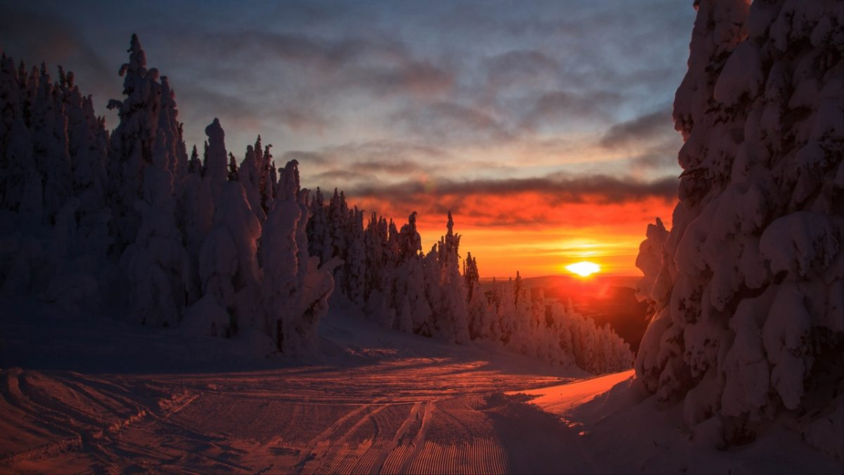 forest_sunset_winter_140313_1280x720-1200x675.jpg
