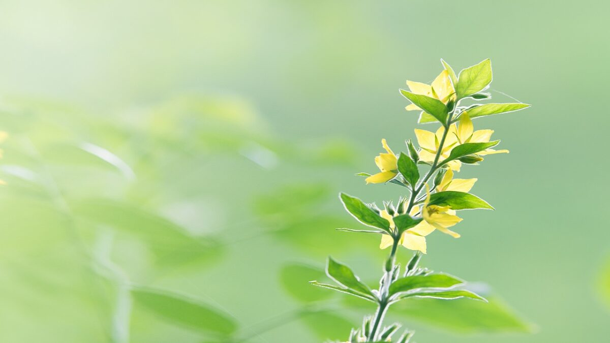 Yellow-Flower-1200x675.jpg