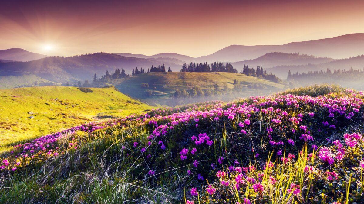 305-3059835_wallpaper-nature-spring-hills-flowers-trees-sun-hill-1200x675.jpg