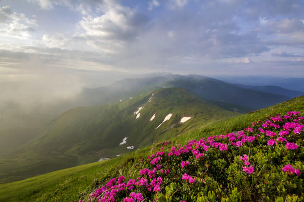 lit-by-sun-mountain-slope-with-blooming-pink-flowers-foggy-mountains-with-green-grass-patches-snow-bright-blue-cloudy-sky-ecology-problems-beauty-nature-concept_127089-6749.jpg