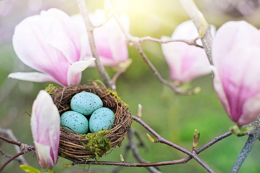 nest-robin-eggs-eggs-spring-nature-easter.jpg